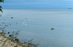 Las aves acuáticas se colocan en las rocas, tres pájaros en una roca en el mar Fotografía de archivo
