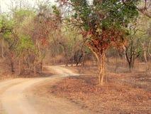 Las Błotnista droga Zdjęcie Stock
