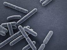 Las bacterias se cierran para arriba Imagen de archivo libre de regalías