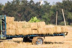 Las balas de la paja del arroz en el camión para el transporte en el arroz colocan el fondo Imagen de archivo