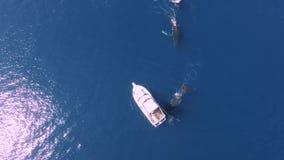 Las ballenas grandes nadan alrededor del pequeño barco de navegación debajo del agua azul profunda del océano, antena 4k almacen de video
