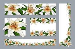 Las banderas fijaron el tipo elegante vector realista del tigre del lirio de las flores ilustración del vector