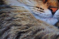 Las barbas de los gatos fotos de archivo