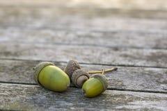 Las bellotas verdes en una superficie de madera con otoño suave se encienden imagenes de archivo