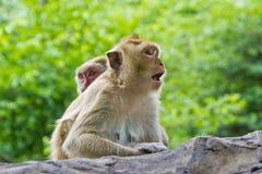 las bingfrightened małpa Obraz Royalty Free