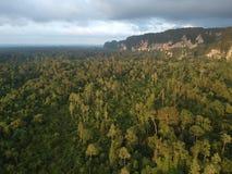 Las blisko Niah jamy zdjęcie royalty free