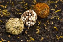Las bolas del chocolate cubrieron en las nueces y los pétalos de la flor, dulces Imagen de archivo libre de regalías