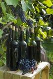 Las botellas viejas de vino hecho en casa fotografiaron contra la perspectiva de la vid Fotos de archivo