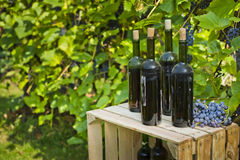 Las botellas viejas de vino hecho en casa fotografiaron contra la perspectiva de la vid Fotos de archivo libres de regalías