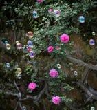 Las burbujas colorized en rosaleda foto de archivo