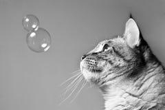 Las burbujas y el gato Imagen de archivo