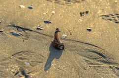 Las cáscaras coloreadas del mar en la playa de oro enarenan cerca de la agua de mar, imagenes de archivo