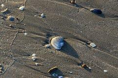 Las cáscaras coloreadas del mar en la playa de oro enarenan cerca de la agua de mar, fotografía de archivo libre de regalías