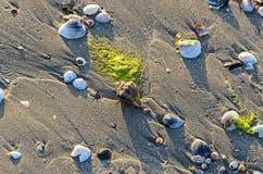 Las cáscaras coloreadas del mar en la playa de oro enarenan cerca de la agua de mar, foto de archivo
