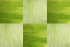 Las cáscaras de maíz aisladas Imagenes de archivo