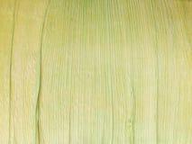 Las cáscaras de maíz aisladas Fotografía de archivo libre de regalías