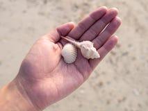 Las cáscaras del mar en mujer entregan la playa de la arena No retire las cáscaras a casa Es hogar del cangrejo de ermitaño Natur fotos de archivo