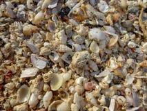 Las cáscaras del mar se cierran para arriba en la playa de Balos con la arena blanca y el color rosáceo de cáscaras en la isla de fotos de archivo