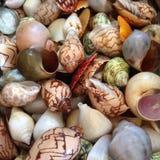 Las cáscaras en la playa Imagen de archivo libre de regalías