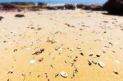 Las cáscaras se lavaron para arriba en la arena en las rocas rojas varan el día soleado, Phillip Island, Australia Imagenes de archivo