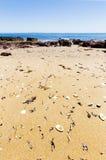 Las cáscaras se lavaron para arriba en la arena en las rocas rojas varan el día soleado, Phillip Island, Australia Imágenes de archivo libres de regalías