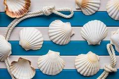 Las cáscaras y el marinero rope en un fondo de madera Concepto del mar Fondo de las historias Foto de archivo libre de regalías