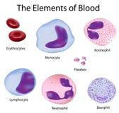 Las células de la sangre Fotografía de archivo libre de regalías