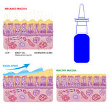 Las células nasales de la mucosa y los cilios micro vector esquema Imagen de archivo libre de regalías