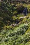 Las caídas de Bronte, Haworth amarran Cumbres borrascosas, país de Bronte yorkshire inglaterra Imagenes de archivo