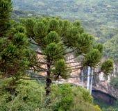 Las caídas de Caracol, o Cascata hacen Caracol, Canela, el Brasil fotografía de archivo