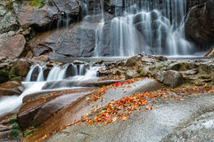 Las caídas del bosque del otoño Imagenes de archivo