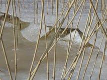 Las cañas están esperando la primavera para venir Foto de archivo
