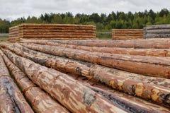 Las cabañas de madera del pino abren una sesión el prado Registros despejados de corteza imagen de archivo libre de regalías