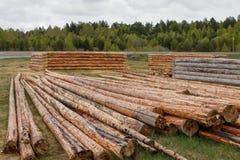 Las caba?as de madera del pino abren una sesi?n el prado Registros despejados de corteza foto de archivo
