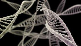 Las cadenas de la DNA se cierran para arriba en el fondo negro Imagen de archivo libre de regalías