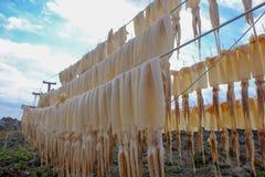 Las cadenas de pescados de la sepia Imágenes de archivo libres de regalías