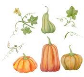 Las calabazas anaranjadas, fijaron Halloween, el ejemplo de la acuarela, las frutas y las hojas ilustración del vector