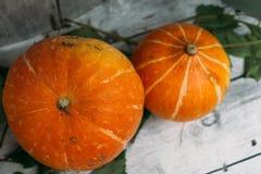 Las calabazas anaranjadas frescas mienten en un fondo blanco, visión superior Fotografía de archivo