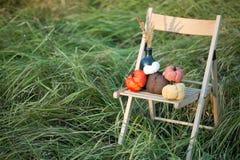 Las calabazas cosechadas adornan Imagen de archivo libre de regalías