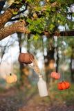 Las calabazas cosechadas adornan Imagenes de archivo