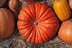 Las calabazas de diversos colores y la forma mienten en el heno Autumn Harvest Fotos de archivo libres de regalías