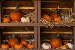 Las calabazas, talla media y miniatura, anaranjado y blanco, todavía exhibición de la vida en los estantes de madera se acurrucar fotos de archivo