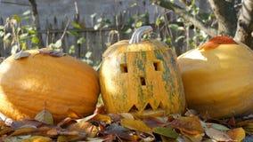 Las calabazas talladas de Halloween se colocan exteriores como decoración Preparación para el día de fiesta del otoño almacen de metraje de vídeo