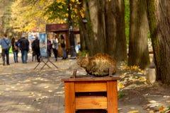 Las calles de la ciudad en el otoño - Vrnjacka Banja, Serbia imagen de archivo libre de regalías