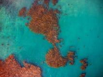 Las camas del quelpo y los mares azules tiraron desde arriba, del aire, del cielo Imágenes de archivo libres de regalías