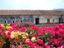 Las Capuchinas bougainvillea. View from Capuchinas ruins, Antigua, Guatemala stock image