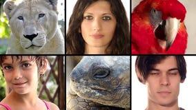 Las caras humanas y animales cercanas suben el montaje metrajes