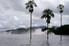 Las cascadas rodearon un lago con tres palmeras Fotos de archivo