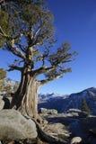 Las cataratas de Yosemite pasan por alto Imagen de archivo