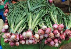 Las cebollas frescas para la venta en un mercado mexicano atascan Imagen de archivo